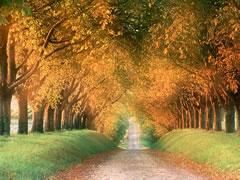 Chemin - Paysage