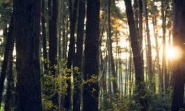 Forêt - Lumière