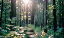 Soleil et reflets dans le bois de Jacek Smoter (unsplash.com)